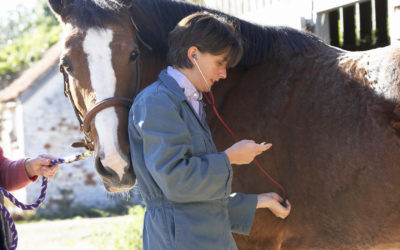 Continued Need for Equine Infectious Anemia (EIA) Testing