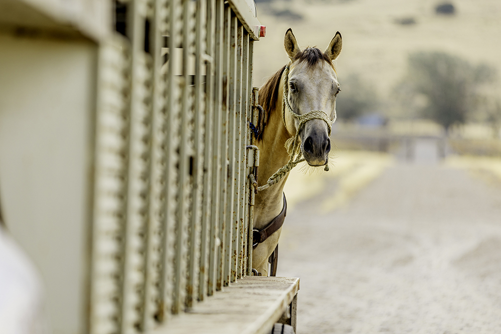 All about Extended Equine Certificates of Veterinary Inspection (EECVI)