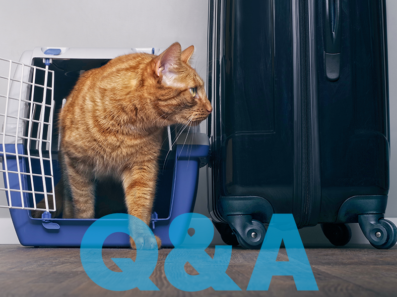 Q&A from Small Animal Requirements Webinar