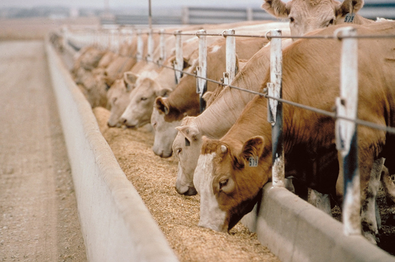 Veterinary Feed Directive (VFD) Regulation Q&A Update