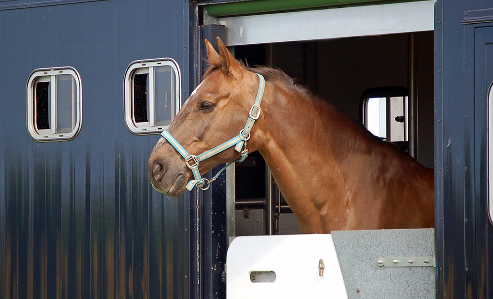 Compliant horse travel for 30 days or 6 months?