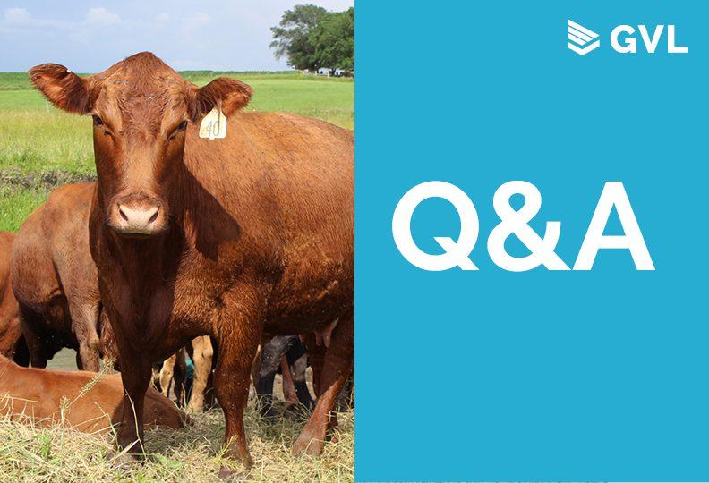 Q&A from Cattle Interstate Travel Compliance Webinar